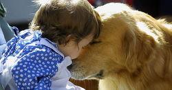 Родители обязаны покупать домашних собак