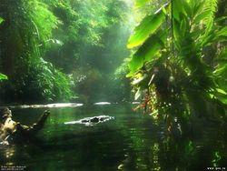 Леса Амазонки вызывают дожди
