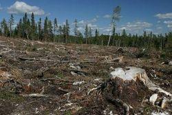 Ухудшение экологии