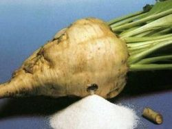 Урожай сахарной свеклы