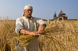 Урожайность ранних зерновых культур Крыма