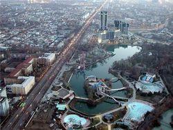 В столице Узбекистана массово вырубают ели – причины
