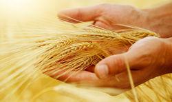 Производство аргентинского зерна