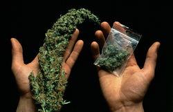 Продажа марихуаны