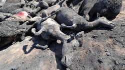 В Узбекистане погибло до 50 тысяч голов скота