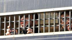 арест террориста