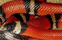 В многоэтажке ищут змею