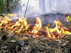 Пожар в заповеднике Аскания Нова