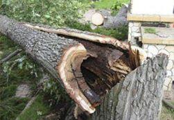 дерево обрушилось на автомобили