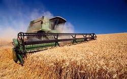 Прогноз для пшеничного рынка Европы неутешителен