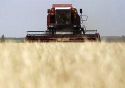 Инвесторам: будут ли цены на зерно в России стабильными?