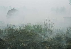 """Насколько опасен огненный """"шторм"""" пожаров в районе Киева?"""