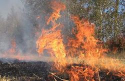 Леса России охвачены огнем