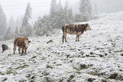 Австрию первой в ЕС накрыло … снегом