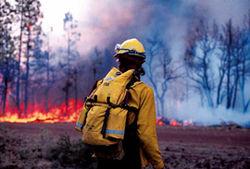 За гибель людей на лесных пожарах возбуждено первое уголовное дело. Кто виноват?