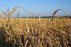 Пошлину на зерно отправят в «плавание»?