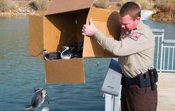 Пернатое безумие в США: тысячи птиц рухнули на асфальт