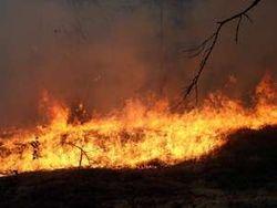 Под Киевом разгорелся сильный пожар