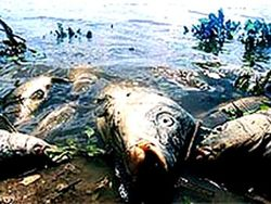Аномальная жара в Украине вызвала экологическую катастрофу ...сколько времени потребуется на восстановление фауны?
