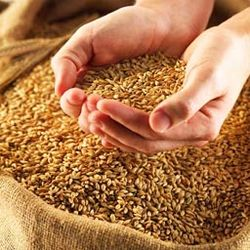 Иран столкнулся с дефицитом пшеницы