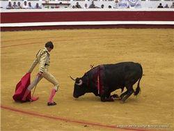 Коррида в Испании входит в опалу?