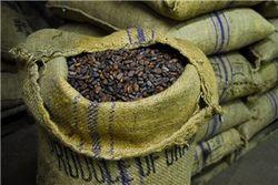 Употребление какао избавляет от склероза