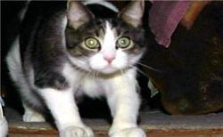 Американского кота пригласили стать присяжным судебным заседателем