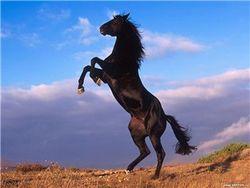 Спасли ли коня, упавшего в колодец?