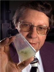 Какие доказательства внеземной жизни обнаружила в метеорите NASA?