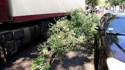 Эхо урагана в Одессе: ветка проломила голову человеку