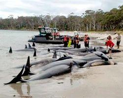 Дельфины массово гибнут у берегов США – ученые в растерянности