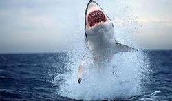 Ученые требуют защитить акул от массового истребления