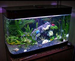 Судебные приставы арестовали за неуплату налогов... аквариум с рыбками