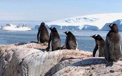 Аргентина продолжает войну с Великобританией в Антарктиде