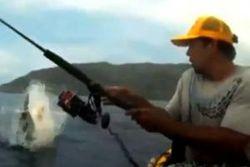 ТОП видео YouTube: атака акулы на рыбака