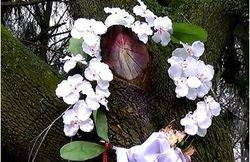 Под Львовом на срубе дерева возник образ Богородицы