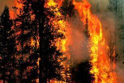 "Костер в лесу на ""майские"" стоит в Украине до 102 гривен штрафа"