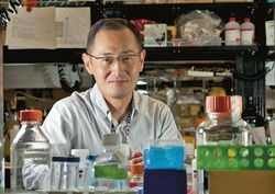 Ученые Японии выходят на новый уровень в использовании стволовых клеток