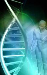 Поправки к Дарвину: Человек эволюционирует медленнее, чем считалось