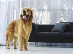 Завещание миллионеров: в Беларуси собака получит миллион