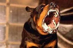 Тот же бешеный пес в Полтаве кусает жителей уже в другом районе – ВКонтакте