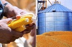Рынок кукурузы: трейдеры об отчетности USDA и перспективах