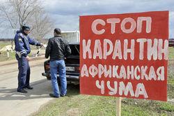 Свиная чума на юге России