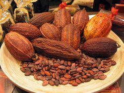 Прогноз урожая какао-бобов для Африки улучшен