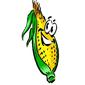 На рынке кукурузы продолжается консолидация цен