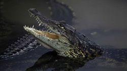 Опасные крокодилы