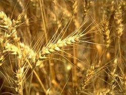 Аграрное министерство Украины ожидает рекордного экспорта зерновых