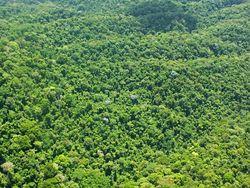 """Ученые убеждены, что нашли в джунглях затерянный """"город золота"""""""