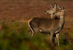 Самки млекопитающих умеют программировать пол потомства – ученые