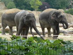 Пожар в шотландском зоопарке уничтожил десятки тропических животных